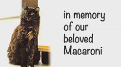 In memory of our beloved Macaroni